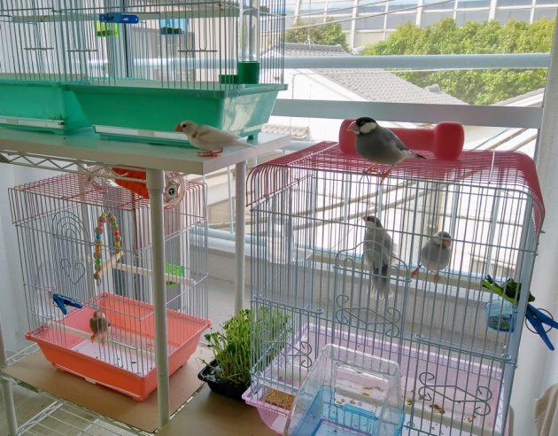 きょうの放鳥